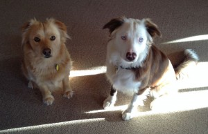 Our dogs, maggie and sarah